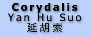 corydalis flat