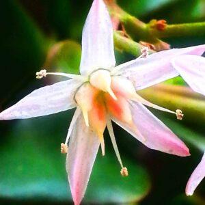 flower-3-sm