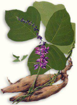 ge gen, rx. pueraria, kudzu root